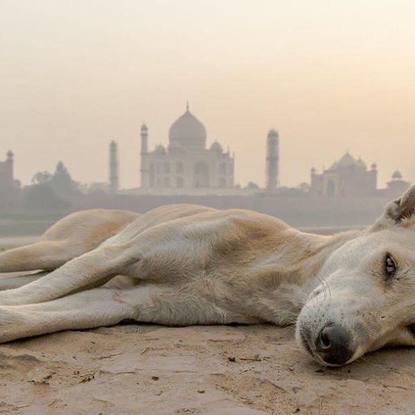 Taj Mahal, India - DanflyingSolo