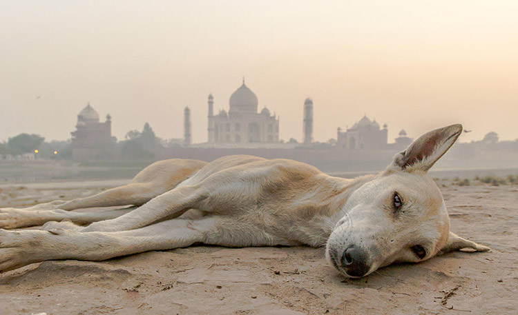 Taj Mahal and Dog - Danflyingsolo