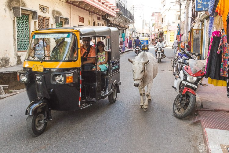 Animals on the road in India