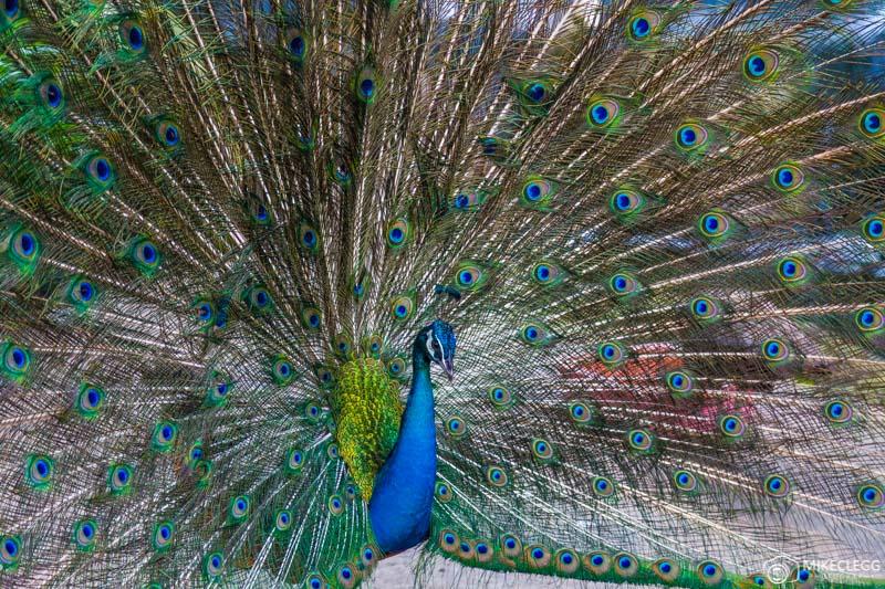 Bird Park Kuala Lumpur
