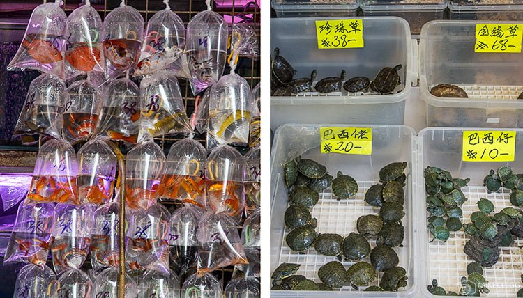 Fish and turtles along Goldfish Market, Hong Kong