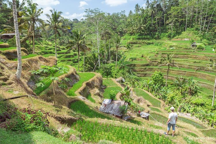 Tegalalang Rice Terrace in Ubud