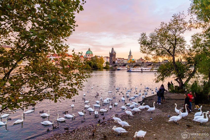 Charles Bridge and Swans, Prague
