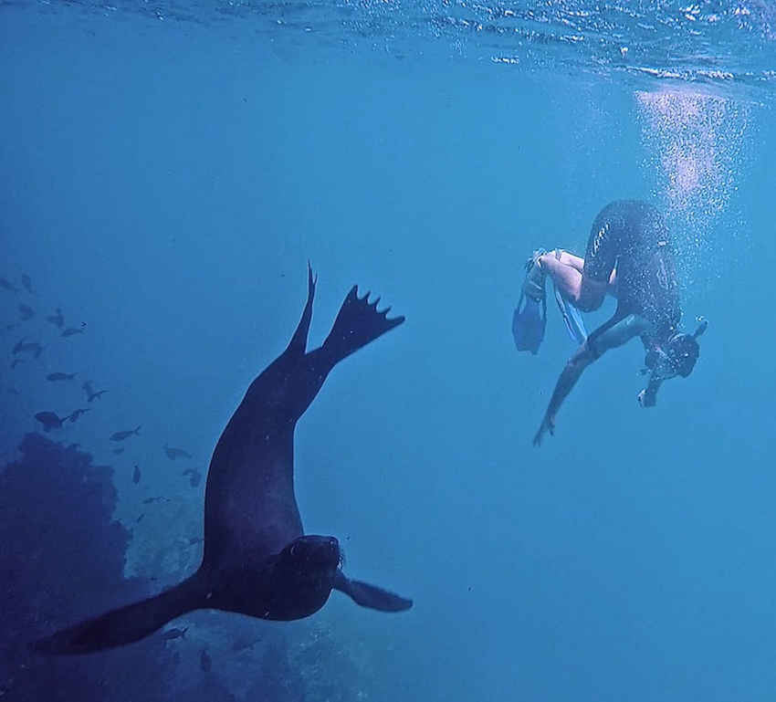 Galapagos-snorkelling by Nomadic Boys-102017
