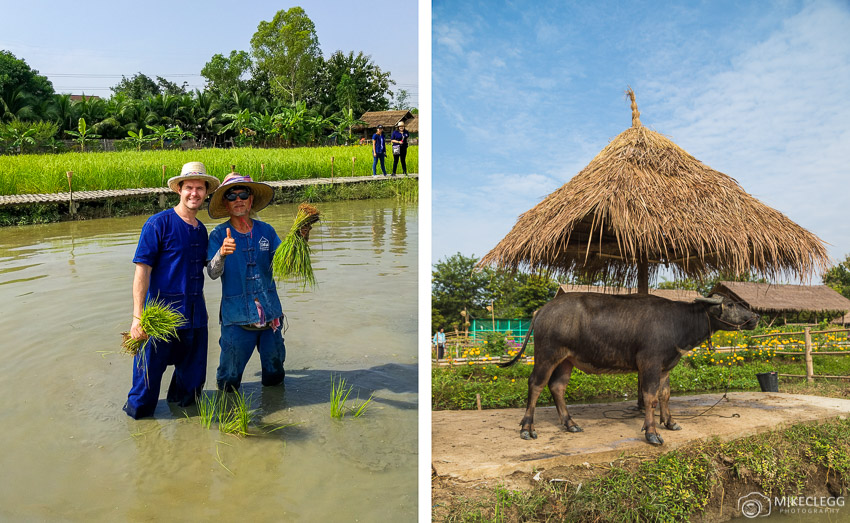 Ginger Farm Chiang Mai