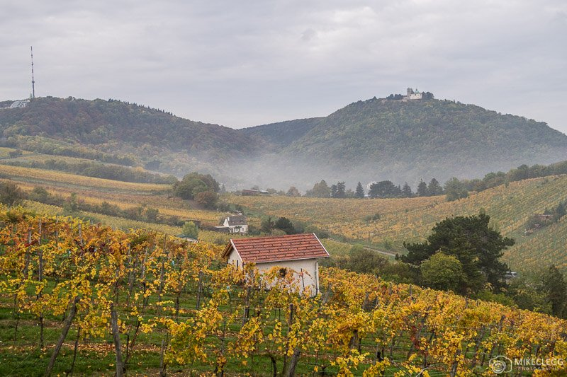 Kahlenberg and winery plantations in Vienna