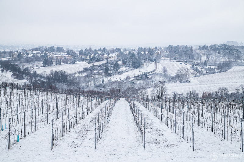 Kahlenberg wine plantations in the winter with snow