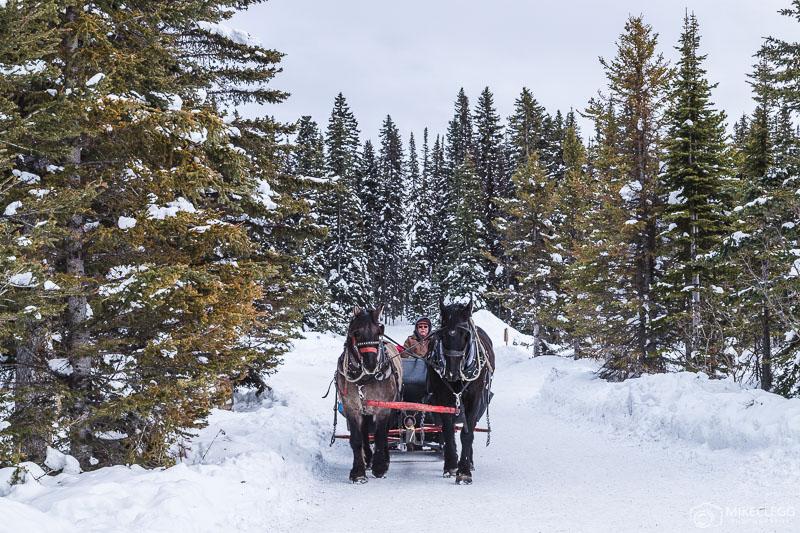 Horse Sleigh Rides, Lake Louise Canada