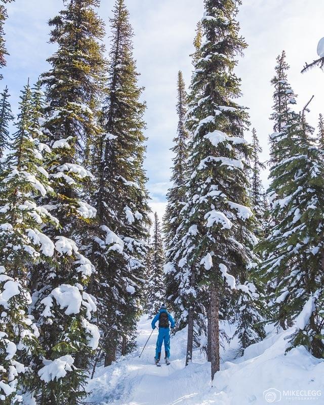 Tree runs at Marmot Basin