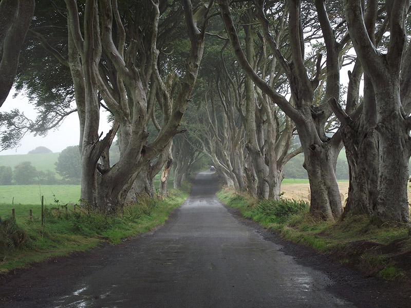 Dark Hedges, Ireland - CC0 (Pixabay)