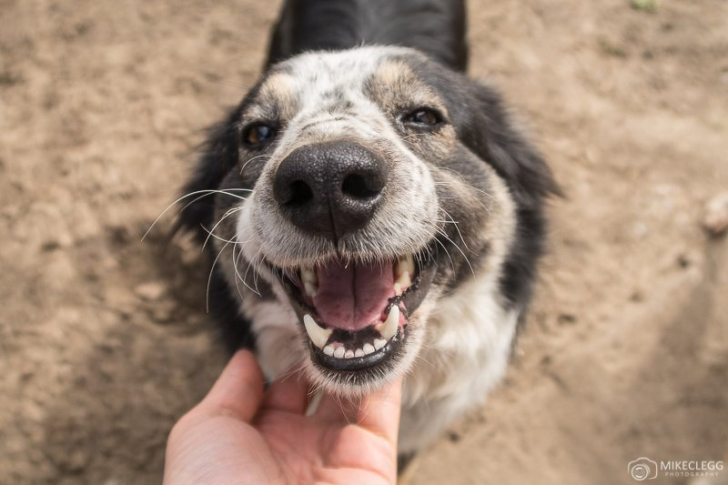 Happy Dogs at Helens House of Hope Dog Sanctuary