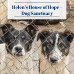 Helen's House of Hope – Dog Sanctuary