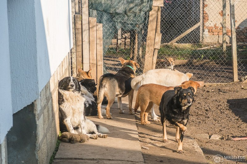 Roamers at the dog sanctuary