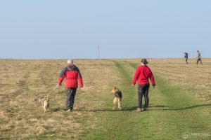 Walking dogs and volunteering