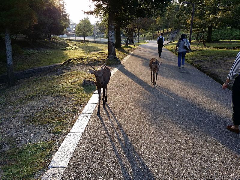 Nara Park Japan - CC0 (Pixabay)