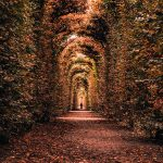 Autumns in Europe - landscape crop
