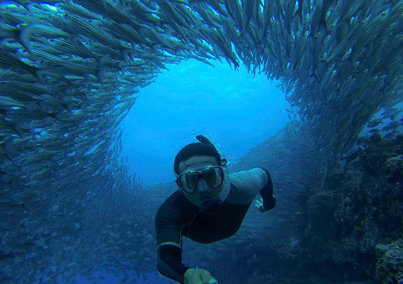 Galapagos Underwater School of Fish - Via G Adventures
