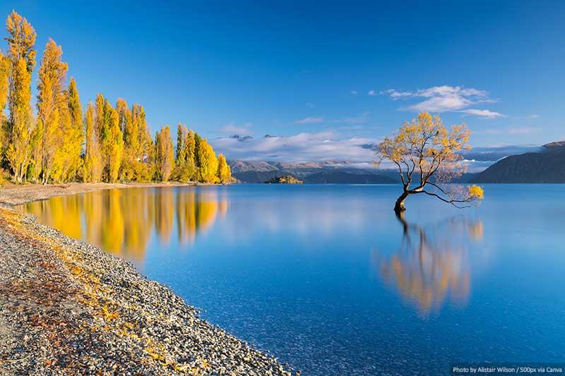 Wanaka Tree in the Autumn