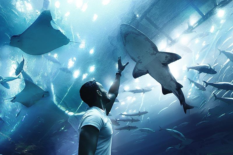 Dubai Aquarium - by Moon-unsplash