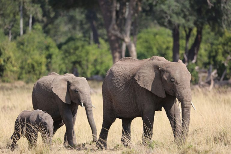 Nature in Tanzania