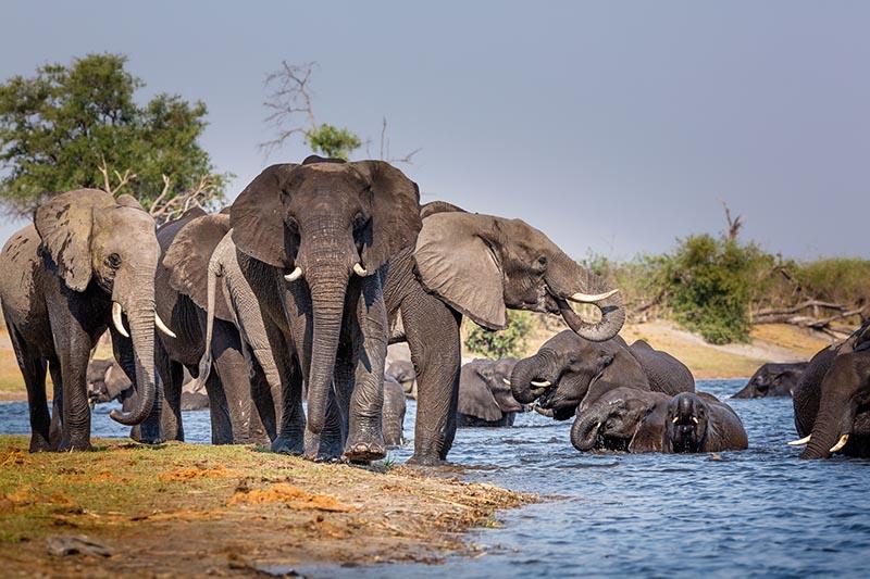 Elephants at Bwabwata National Park
