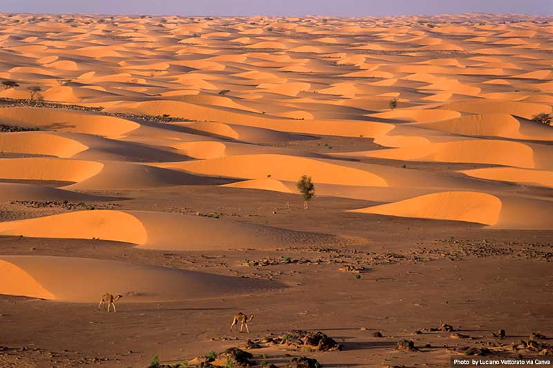 Camels and Deserts in Mauritania