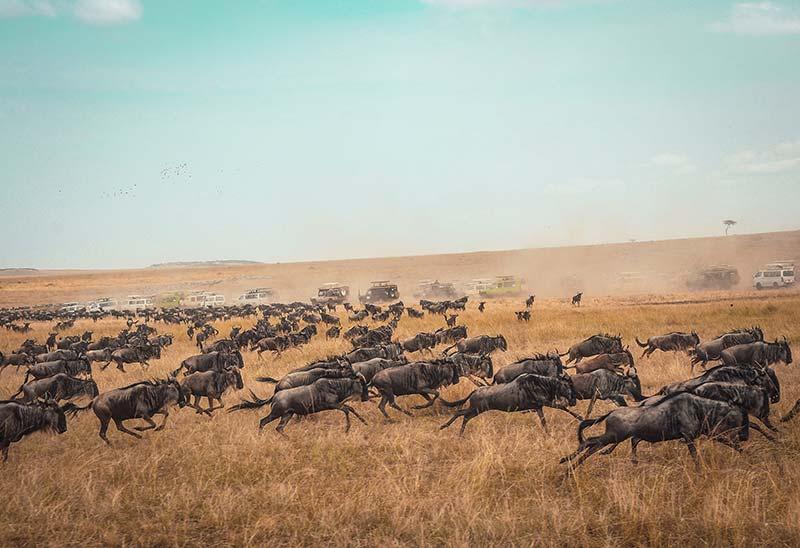 Nature in Maasai Mara National Reserve