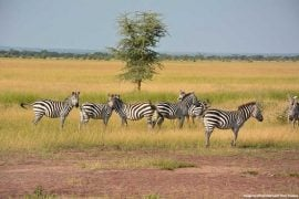 Wildlife in national parks in Africa