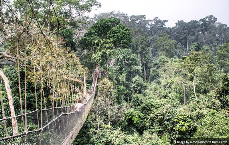 Hanging bridges in Kakum