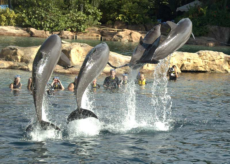 Discovery Cove Dolphins