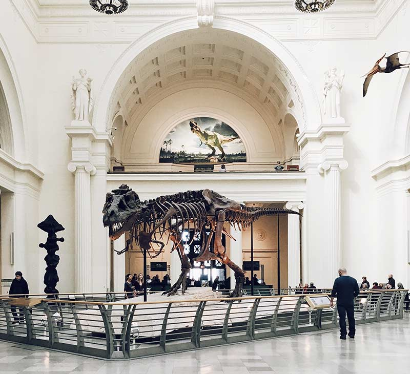 T Rex at the Field Museum