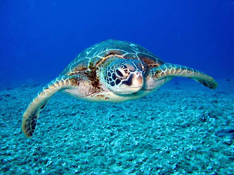 Черепахи  5 тропических мест, которые  должны посетить пара влюбленных Turtles