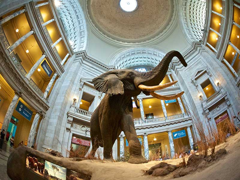 Smithsonian Museum of Natural History - CC0 via Flickr