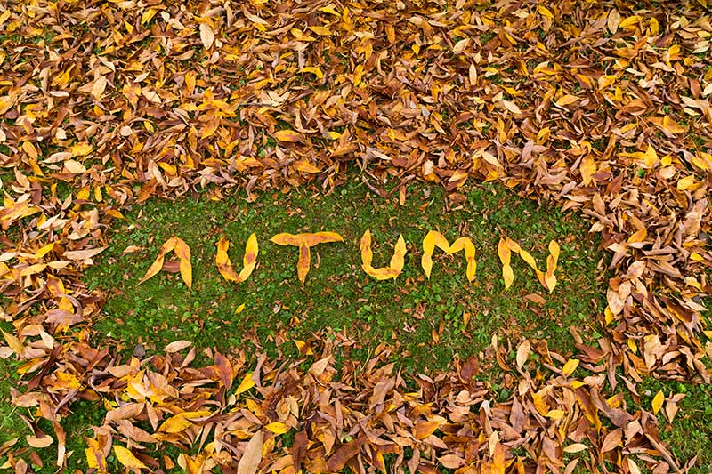 Leaf Art in the Autumn