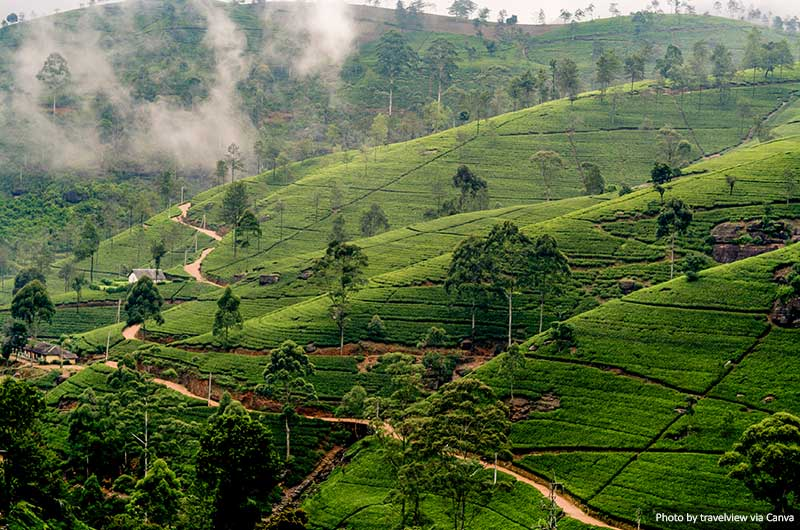 Nuwara Eliya, Sri Lanka in the highlands