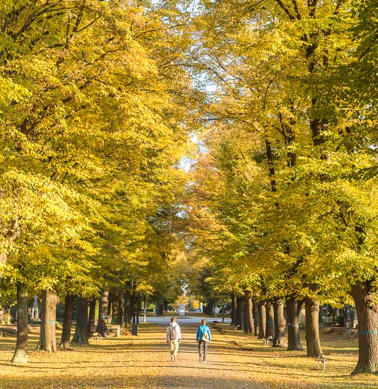 People walking between colourful trees in the autumn