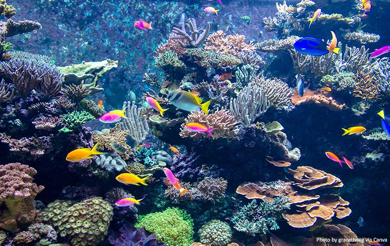 Colourful fish in an aquarium