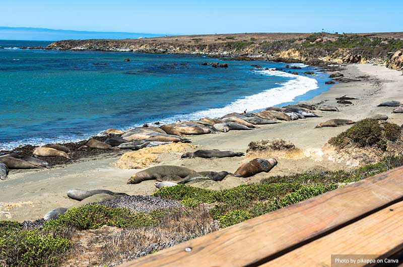 Elephant seals on the beach, San Simeon