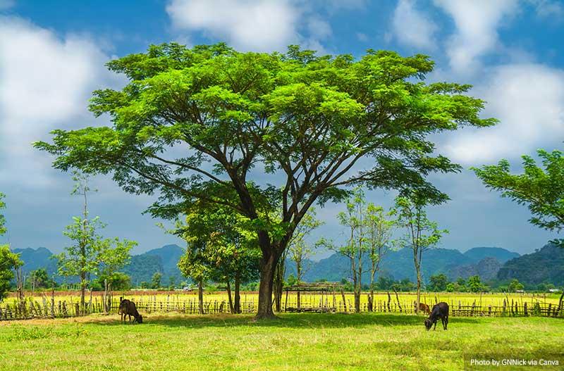 Лаосский пейзаж места в Лаосе 10 лучших и самых красивых мест для посещения в Лаосе Laos landscape
