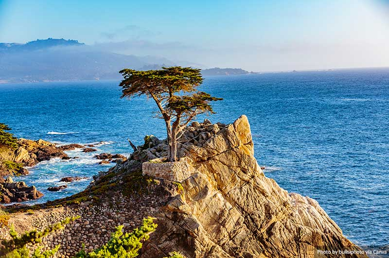 Монтерей Кипр Три Автопутешествие по Калифорнийскому побережью Автопутешествие по Калифорнийскому побережью Monterey Cyprus Tree