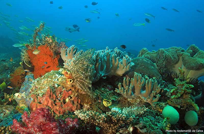 Раджа Ампат Коралловый Риф дайвинг в Индонезии 10 потрясающих мест для дайвинга в Индонезии Raja Ampat Coral Reef