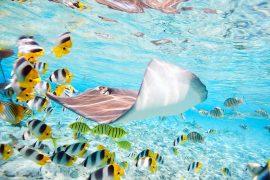 Exotic fish underwater - diving