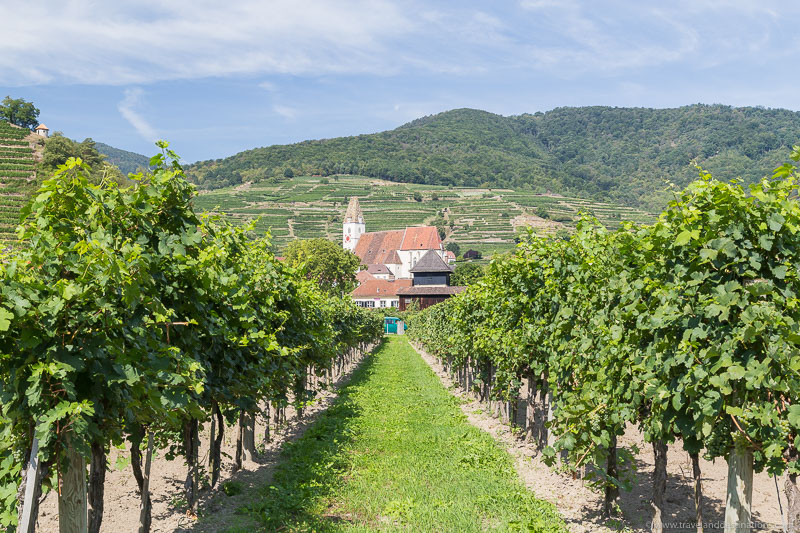 Churches and vineyards in the Wachau Valley