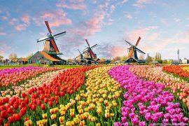 Dutch windmills near the canal in Zaanstad village, Zaanse Schans, Netherlands