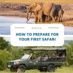 How to Prepare for Your First Safari