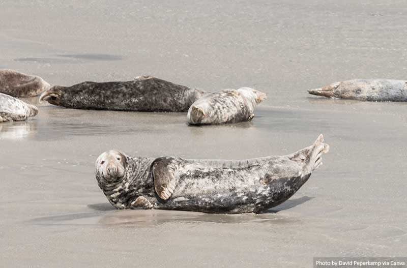 Seals are resting on a sandbar