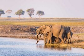 Wildlife at a Safari in the Chobe National Park, Africa