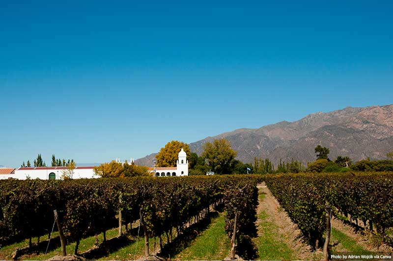 Vineyard in Cafayate - Argentina
