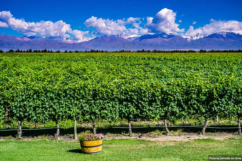 Wineyard in Mendoza, Argentina