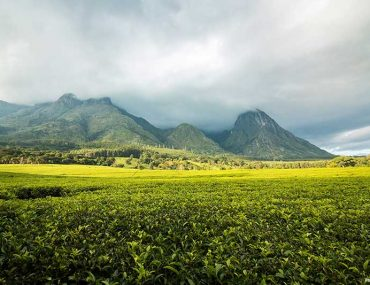 Mount Mulanje - Malawi